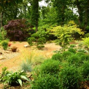 Jardin japonais bambous nains capp paysages 72dpi - Jardins d'ambiance