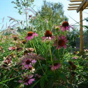 Vivaces capp paysages quimper 96dpi - Jardins d'ambiance