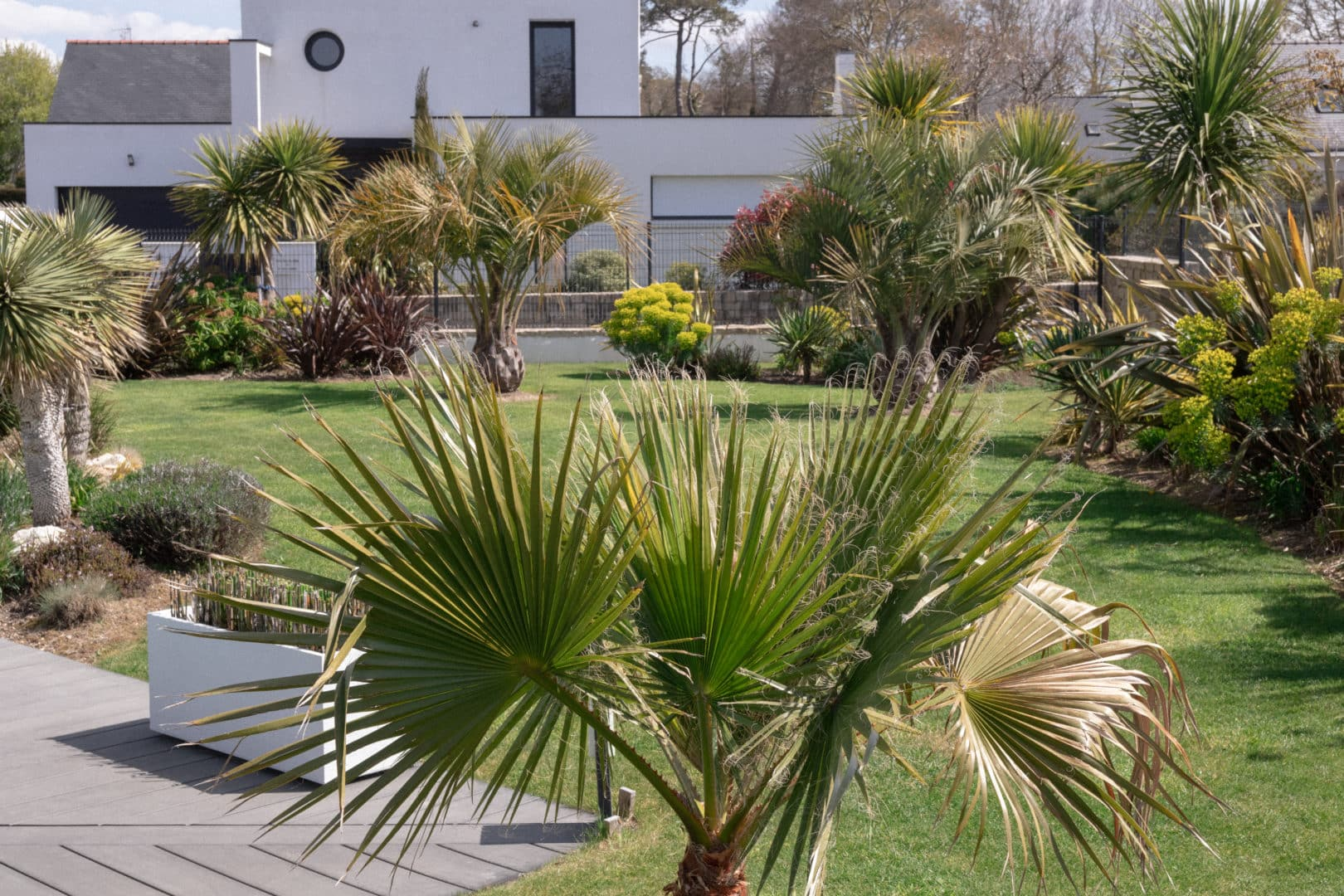 massif exotique jardin palmier capp paysage creation - Jardins d'ambiance