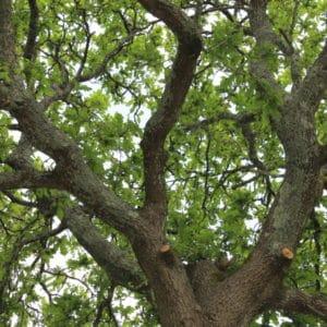 arbre elagage saint evarzec capp paysages - Paysages